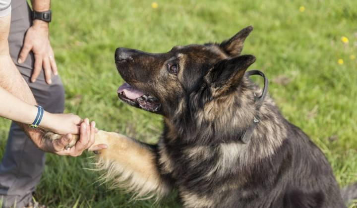 Werken met honden in onze 4voetertherapie